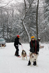 IMG_0044_AutoColor (LifeIsForEnjoying) Tags: mushing dog sledding dogs snowboard sled nike kaskae snow