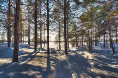 Backlight Snow Trees (Luca Enrico Photography) Tags: cold winter sweden arjeplog landscape forest trees alberi foresta freddo neve snow invrno svezia d750 nikon