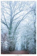 Hivernale (Sogo.photo) Tags: outside nature white trees winter lanscape