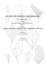 beitrgezurpal02wien_0020 (kreidefossilien2) Tags: velenovský bohemiancretaceousbasin bohemian czech republic palaeobotany flora kieslingswalde