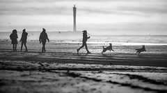 Where is that stick? (Drummerdelight) Tags: shillouettes beach seaside seascape blackwhite dehaan dogs pov dof
