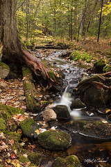 Ken's Creek_27A8076 (Alfred J. Lockwood Photography) Tags: alfredjlockwood nature landscape creek forest steam rocks autumn autumnalcolor autumncolor fallcolor fallfoliage acadianationalpark maine afternoon overcast