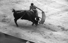 Olé (Arne Kuilman) Tags: lostandfound zimmermans photos photonotmine scan v600 epson holiday found gevonden leica negatives bullfighting bullfighter arena past even spain bull matador