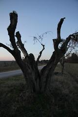 il tempo passa - Pianello di Ostra (walterino1962 / sempre nomadi) Tags: albero corteccia rami strada colline pendii vegetazione alberi arbusti erba luci ombre riflessi pianellodiostra ancona