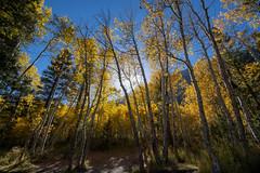 Autumn in Aspendell (RuggyBearLA) Tags: ca california autumn 395 aspendelljunelakecaliforniaunitedstatesus