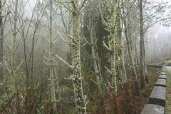 Dias de niebla...!!! (Camelia-5) Tags: bosque niebla coruña