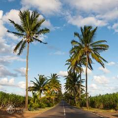 _MAD3813-1 (Victoria_Rogotneva) Tags: africa mauritius unitravelscom victoriarogotneva adventure airphoto beach holiday ocean phototour phototravel