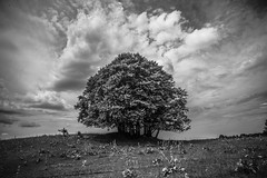 Summer Tree (PaxaMik) Tags: tree summertree summertime countryside frenchcountry sky cloudy plateauderetord retord campagne vert green blackandwhitephotos black contraste