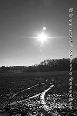 Braine-l'Alleud (gazoumou) Tags: sylvievannerum gazoumou brainelalleud belgique brabantwallon monochrome nb bw paysage campagne europe landscape belgium hiver