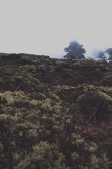 Wave with us (gabyuchi1) Tags: mood moody gloomy gloom nature forest uphill hill fog sad green mountain