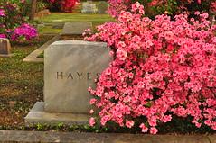 DSC_8870 (scsmitty) Tags: princegeorgewinyahchurch cemetery gravestone azaleas georgetownsc georgetown