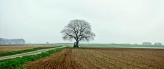 Baum (wernerfunk) Tags: tree hessen landschaft landscape felder