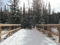 Bunny Loop ... (Mr. Happy Face - Peace :)) Tags: alberta albertabound cans2s canada snow skiing outdoors activities trees forest groomed braggcreek art2019