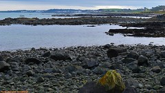 Rocky Shoreline (ASHA THE BORDER COLLiE) Tags: donaghadee shoreline rocky beach connie kells county down photography
