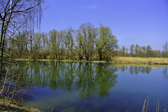 Peaceful morning at river Isar (Kat-i) Tags: fluss river isar wasser water himmel sky bäume trees spiegelungen reflections blau blue nikon1v1 kati katharina 2019