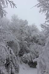 Bulgarian winter (Creativespirit13) Tags: winter snow blackandwhite snowlandscape trees balkan mountains bulgaria staraplanina balkanmountains