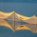 Sun in the Net
