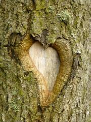 Heart (Jackal1) Tags: tree bark shape heart texture nature