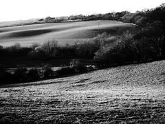 Low Sun Over the Fields (cycle.nut66) Tags: sun sunlight sunny sunshine shadows rolling countryside hill hedge hedgerow trees grass horizon sky grainyfilmartfilter olympus epl1 evolt micro four thirds ridge ridges black white monochrome grayscale contrast mzuiko 1442