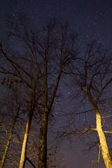 Racing the Stars (matthewkaz) Tags: trees stars sky night astronomy dark morehead rowancounty kentucky longexposure 2016