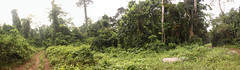 Nsuta Forest Reserve in Ghana (inyathi) Tags: westafrica ghana rainforests forests nsutaforestreserve panoramamaker panoramas panoramics africanlandscapes africa