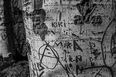 scritte su alberi (Okmarjx) Tags: spring nature animals animal flower flowers sea blackandwhite colors color
