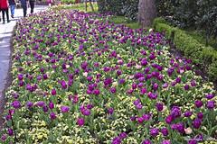 IMG_5636 (Roger Kiefer) Tags: dallas arboretum flowers outdoors beauty nature