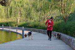 DÍA DE PERROS (Gerardo Olvera) Tags: mexicana mx méxico cdmx nikon d5200 ciudad cityscapes perros mascora basset coon hound treeingwalker parque