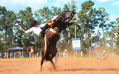 Vitor Ferreira e Macumbeiro (Eduardo Amorim) Tags: gaúcho gaúchos gaucho gauchos cavalos caballos horses chevaux cavalli pferde caballo horse cheval cavallo pferd pampa campanha fronteira quaraí riograndedosul brésil brasil sudamérica südamerika suramérica américadosul southamerica amériquedusud americameridionale américadelsur americadelsud cavalo 馬 حصان 马 лошадь ঘোড়া 말 סוס ม้า häst hest hevonen άλογο brazil eduardoamorim gineteada jineteada