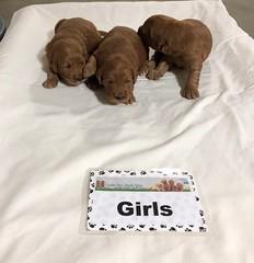 Maggie Mae Girls 4-13