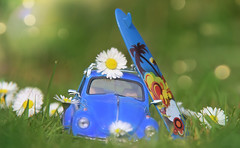 Bugging the Daisies... (KissThePixel) Tags: daisy daisychain daisies flowers spring springmeadow grass longacremanor bokeh bokehlicious sunlight light bokehwednesday april garden creativephotography creativeart creative creativegardening fun funphotography vw vwbeetle vwbug beetle car toycar perspective perception pov stilllife stilllifephotography blue bluecar toy nikon nikond750 surf surfboard pretty beautiful art artistic macro makro nature