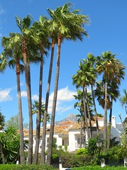 Palm Tree Villa! ('cosmicgirl1960' NEW CANON CAMERA) Tags: marbella spain espana andalusia costadelsol puertobanus blue sky green trees villas travel holidays yabbadabbadoo houses homes