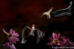 20190410  Whirlwind Battle 25033-Edit (Laurie2123) Tags: 52weeksof2019 ad200 hummer hummingbird laurieabbottturner laurieabbotthartphotography laurietakespics nikkor105mm nikond800e composite flower flowers hummers offcameraflash smoke texture texturedimage fantasy week12