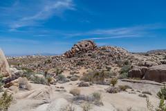 (el zopilote) Tags: joshuatreenationalpark california landscape trees mojavedesert clouds canon eos 5dmarkii canonef24105mmf4lisusm fullframe