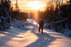 Martn reitet aus dem Sonnenuntergang (MadCyborg) Tags: erzgebirge fuji fujifilm gegenlicht oremountains schnee sonnenuntergang winter xt20 clearsky cold contrejour fantasticlight opposinglight snow sunset bokeh