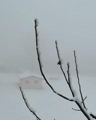 Tra nebbia e neve sulla montagna bolognese nei pressi di Ca' di Pallerino (Monghidoro) (Valerio_D) Tags: cadipallerino càdipallerino monghidoro emilia emiliaromagna italia italy 20182019inverno 1001nights 1001nightsmagiccity
