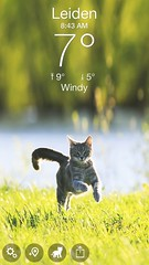 Zaterdag 9 februari 2019 (gill4kleuren - 18 ml views) Tags: cat mouse moments kat pet animal pussycat pussy poezen poes hair eyes little puss jong young katze chat minou mieze gata gato gatta katje gatto kitty kater photo weer weather day