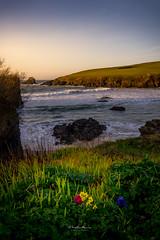 Trevone Bay, Cornwall, UK (David Lea Kenney) Tags: beach beachscape flower flowers grass landscape cornwall england uk seascape coast coastal marine waves rock cliff cliffs rocks sunset explore travel sunrise