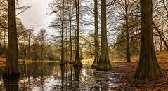 Bäume (tan.ja1212_2.0) Tags: bäume baum wasser tümpel wald natur spiegelung tree trees water forest nature reflection pond