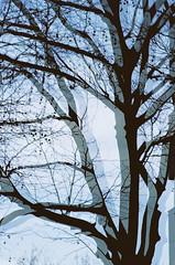no title (biancarosa.looman) Tags: analog handheld reflection graphic tree canon kodakfilm arnhem