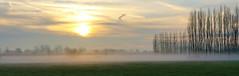 Morning glory (roland_tempels) Tags: nature melsele fog belgium landscape sun supershot