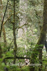 Redwoods National Park (101) (Framemaker 2014) Tags: redwoods national park orick california northern pacific ocean coast highway united states america