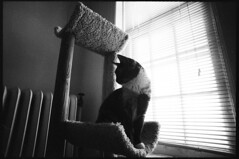 (blakeboulka) Tags: 35mm black white ilford hp5 plus film bw hp5plus bnw filmstock light dark shadows contrast analog manual nikon f3 animals cats tila perched watchers windows towers radiators