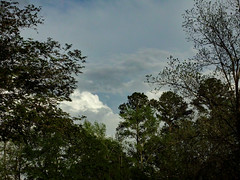 Clouds And Trees. (dccradio) Tags: lumberton nc northcarolina robesoncounty outdoor outdoors outside nature natural park citypark raymondbpenningtonathleticcomplex penningtonathleticcomplex northeastpark april weekend saturday saturdaynight saturdayevening evening goodevening spring springtime hp hewlettpackard hpdsccb350 tree trees treebranch branch branches treebranches treelimb treelimbs sky eveningsky