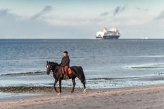 What is luxury? (Siebbi) Tags: balticsea ostsee pferd horse riding reiten strand beach