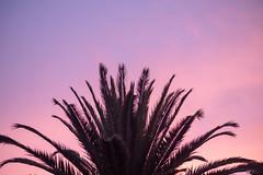 Purple Haze (Rushay) Tags: backgrounds nature skyline sunset palmtree purple portelizabeth southafrica