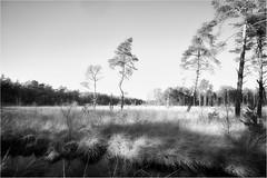 L1780082 (.rog3r1) Tags: rotenburg weissesmoor leica m8 bw black white landscape weiss landschaft niedersachsen schwarz sw