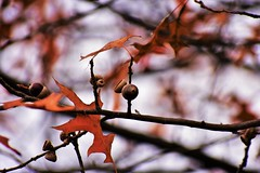 Fall Forest (filmcrazy1014) Tags: nikon outdoor nature wildlife trees white orange macro bokeh leaves leave detail abstract abstractnature fall brightcolors blur blurbackground wood tree treebranch branch brown black