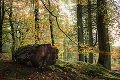 The Woods in Autumn (Benjamin Driver) Tags: woods wood forest woodland autumn autumnal leaves log grass light backlight backlit back trees tree colour colours