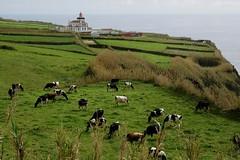 Ponta da Ferraria (halifaxlight) Tags: portugal azores saomiguel pontadaferraria lighthouse cliffs shore fields cows grazing green sea diamondclassphotographer flickrdiamond